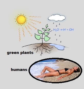 Professor Gerald Pollack Proposes that Nature Utilises the Initial Stages of Photosynthesis in Plants for Energy Production in the Human Body